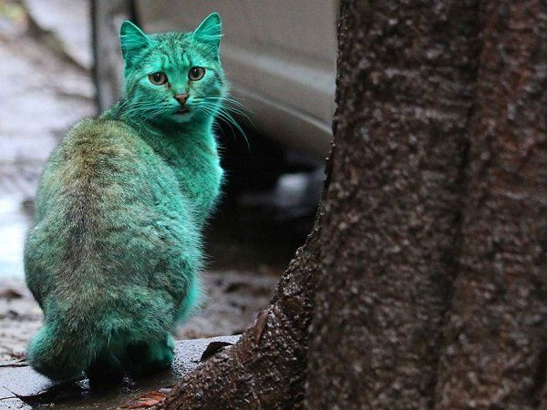 gatto verde Varna Bulgaria 3