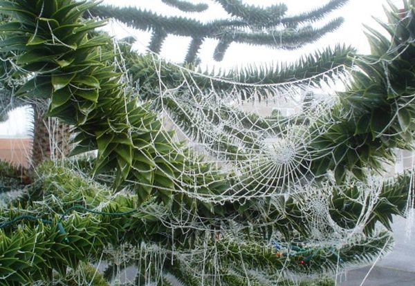 Natale da ragno: Ucraina