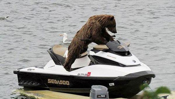 orso in acquascooter