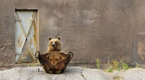 orso che fa ginnastica