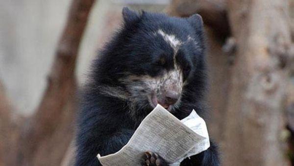 orso in lettura