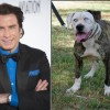 Boof cane sosia di John Travolta