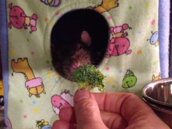 Dexter: il topo che odia i broccoli