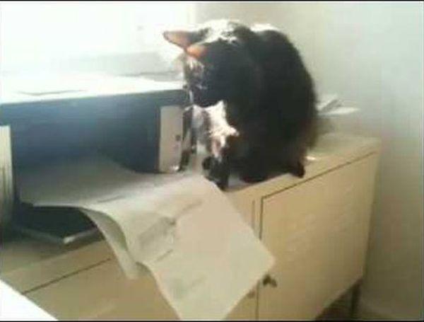 gatto e stampante