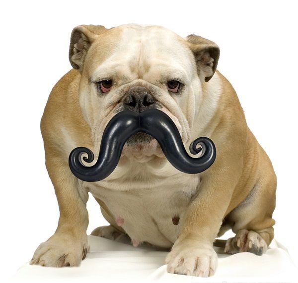 moustache masticabile
