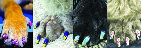 smalto unghie per cani