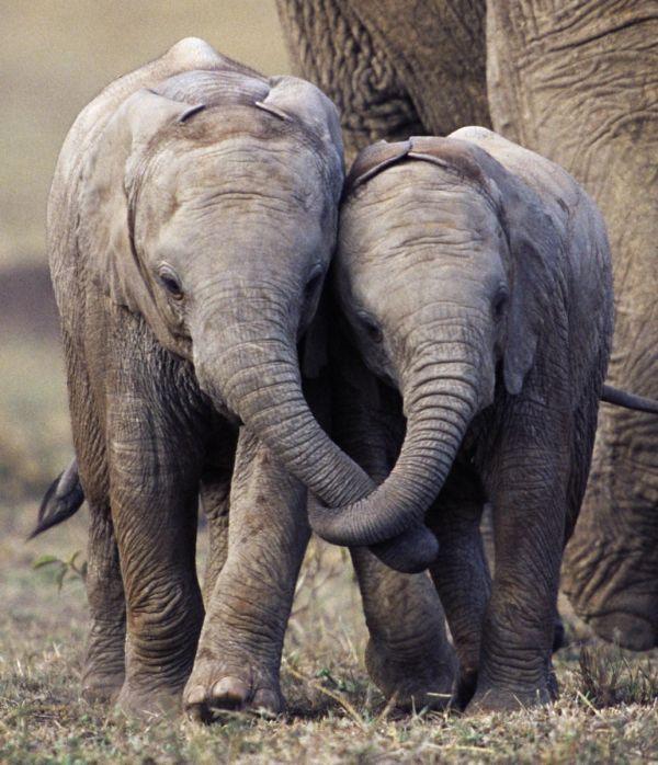elefanti abbracciati