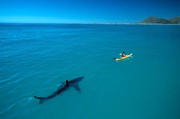 squalo che insegue una canoa