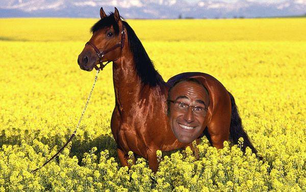Carlo Conti - stallone bruno