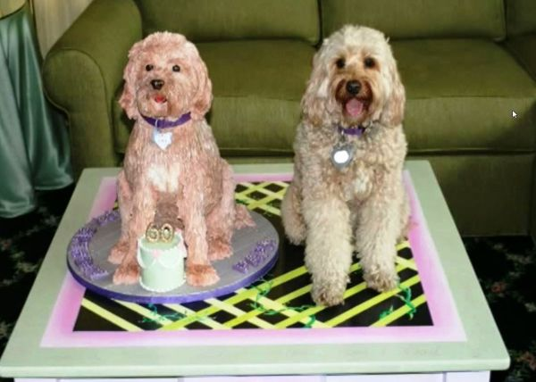 torta a forma di cane per il compleanno di un barboncino
