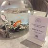 pesce rosso in affitto